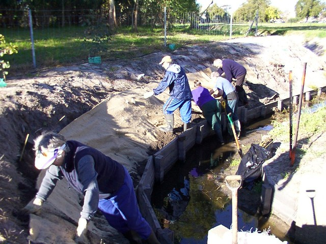Planting into jute matting