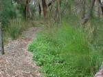 wilson path