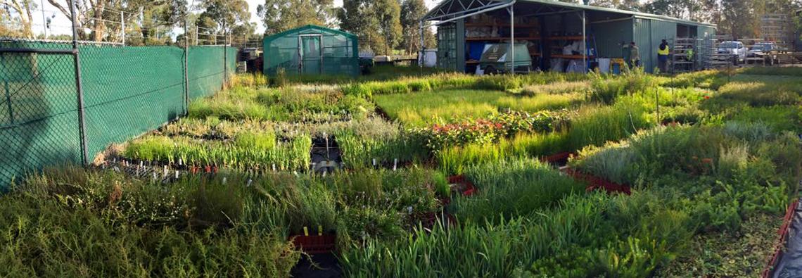 Planting Season